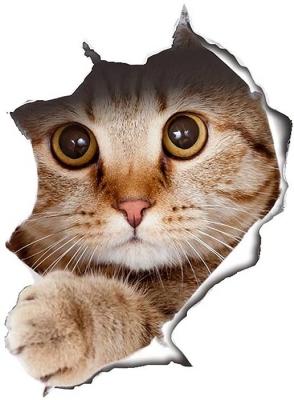 Vinilo impreso efecto 3D gatito beige grande -  100x100cm - MODELO: 3D_0041