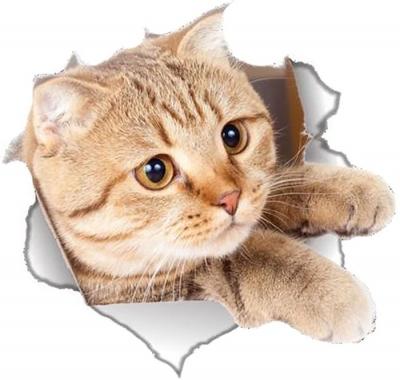 Vinilo impreso efecto 3D gatito beige lateral mediano -  80x80cm - MODELO: 3D_0042