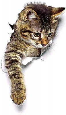 Vinilo impreso efecto 3D gatito atigrado mediano-  80x80cm - MODELO: 3D_0044